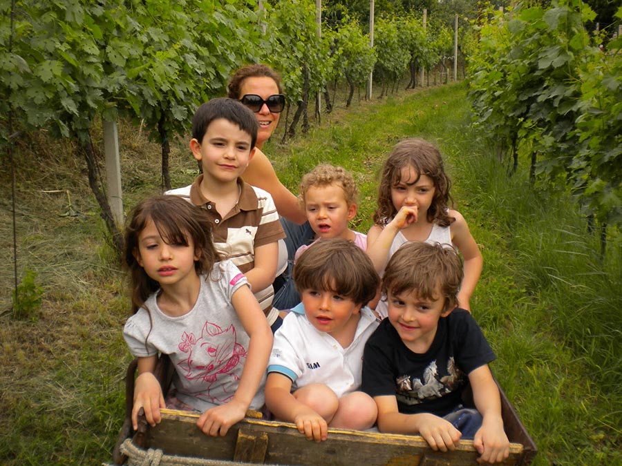 The Children on a tractor in the vineyard